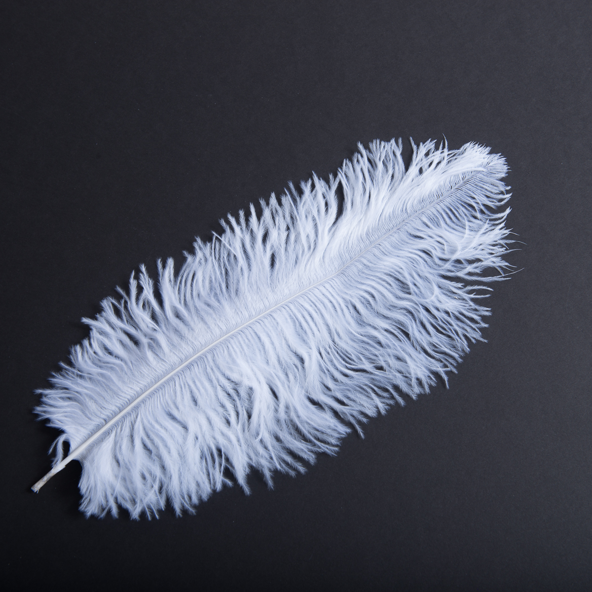 Ostrich Feather 8 10 12 14 15 Inch 801083 Sun Yorkos Zoria White