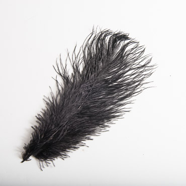 Black Ostrich Feather 10 - 12 Inch