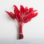 Red 5-6'' Stripped Coque Feathers -72PC