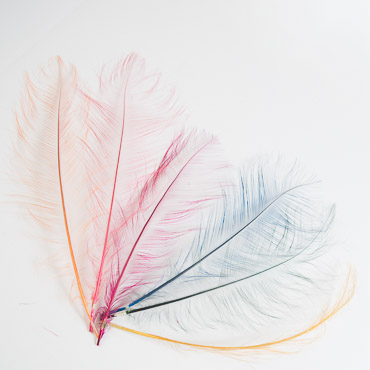 Burnt Ostrich Feather Trims By Piece