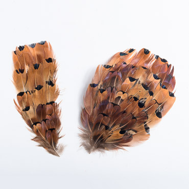 Heart Ringneck Pheasant Feather Pads